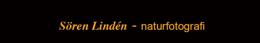 naturfoto logo