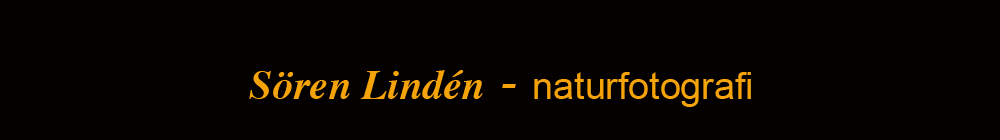 Naturfakta.se logo